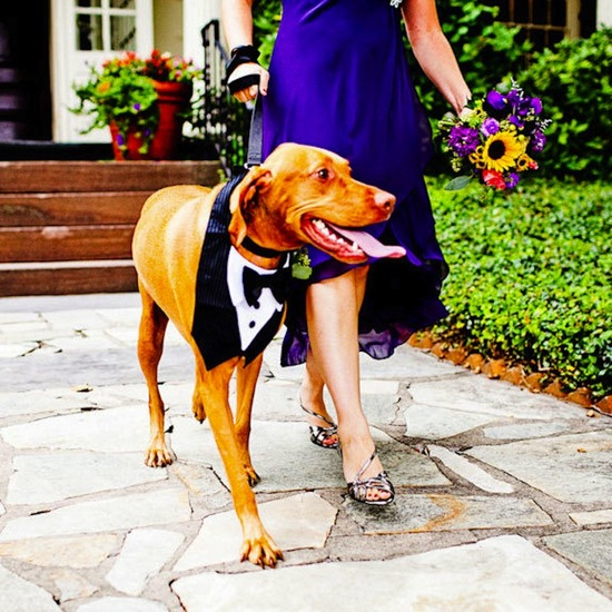unique wedding ideas incorporating dogs cute wedding attire tux
