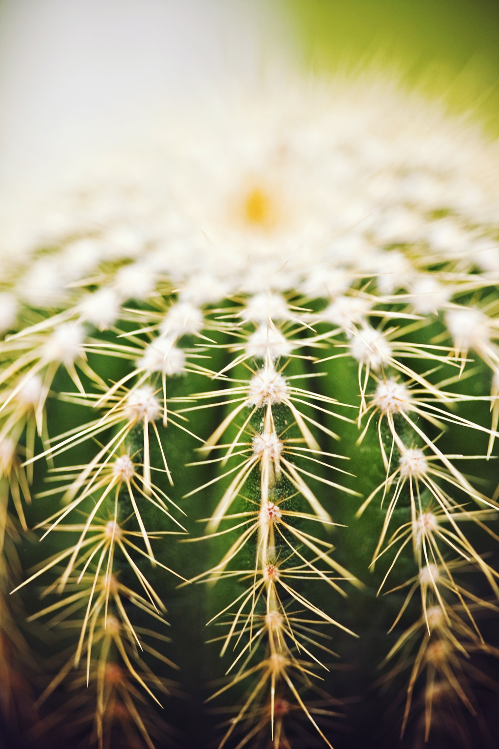 Wedding-photography-unique-engagement-session-outdoors-rustic-romance-cacti.full