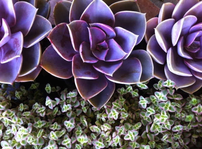 Purple-green-wedding-flowers-succulents.full