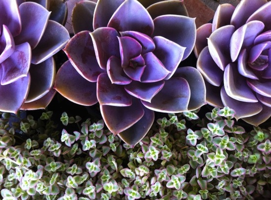 purple green wedding flowers succulents