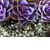 Purple-green-wedding-flowers-succulents.square