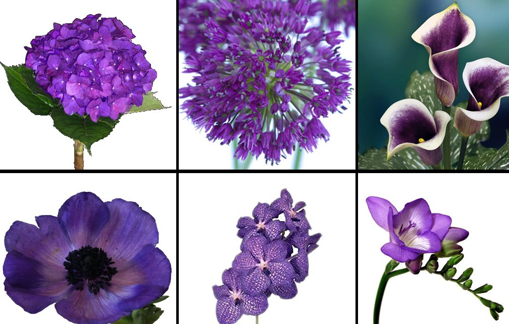 Purple-wedding-flowers-six-gorgeous-kinds-2.full