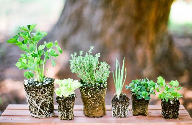 Santa-barbara-chic-wedding-flowers-diy-green-herb-centerpiece-ideas-how-to-make-an-herb-centerpiece-6.full