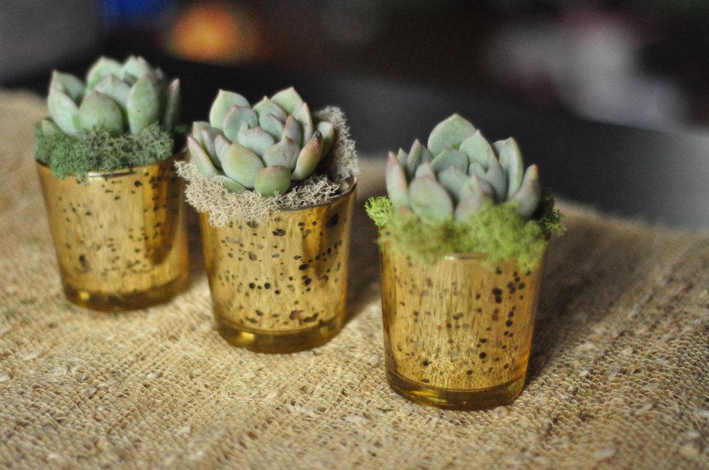 Rustic-moss-wedding-ceremony-reception-decor-eco-friendly-simple-succulent-centerpieces.full