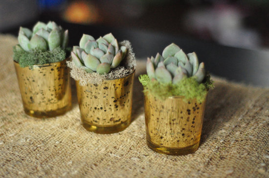 rustic moss wedding ceremony reception decor eco friendly simple succulent centerpieces
